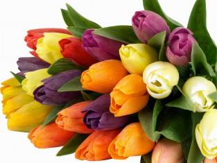 nature-landscapes_other_spring-tulips_2218